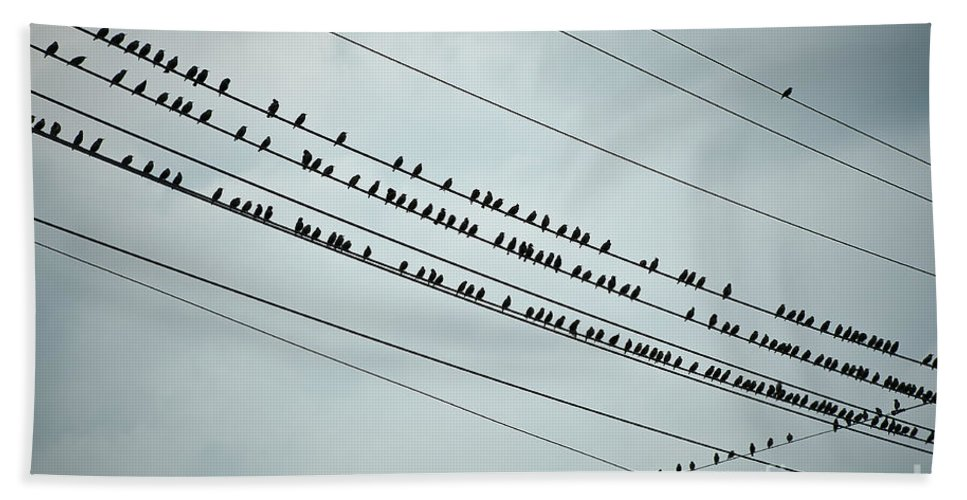 Aves Beach Towel featuring the photograph Birds On A Wire by John Greim
