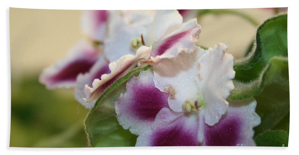 Outdoors Beach Towel featuring the photograph Blush by Susan Herber