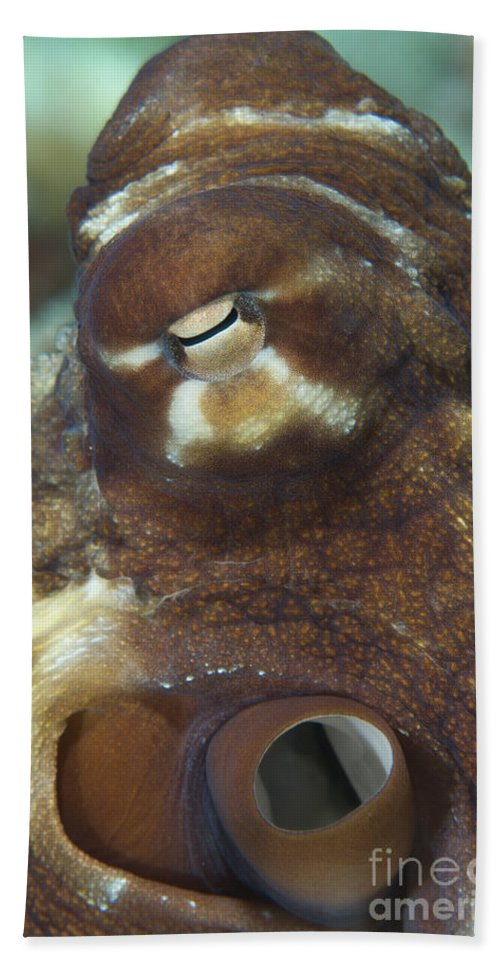 Common Octopus Beach Towel featuring the photograph Close-up View Of A Common Octopus by Steve Jones