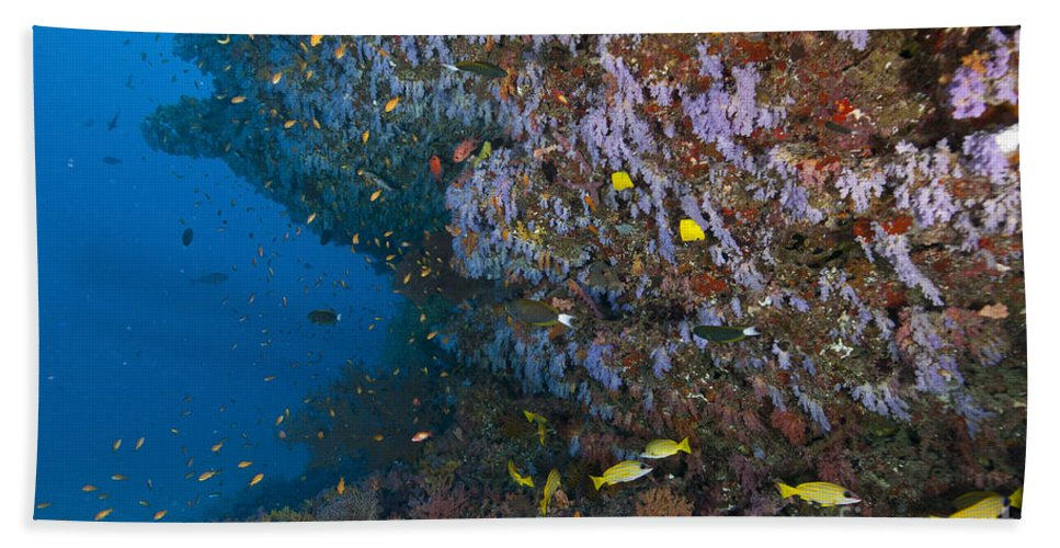 Snapper Beach Towel featuring the photograph Colourful Reef Scene, Ari And Male by Mathieu Meur