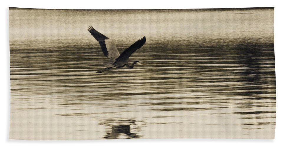 Blue Heron Beach Towel featuring the photograph Crossing The Lake by Douglas Barnard