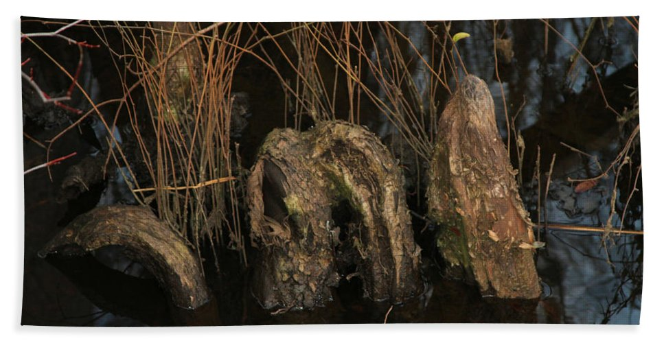 Swamp Beach Towel featuring the photograph Cypress Knee Monster by Jennifer Stockman