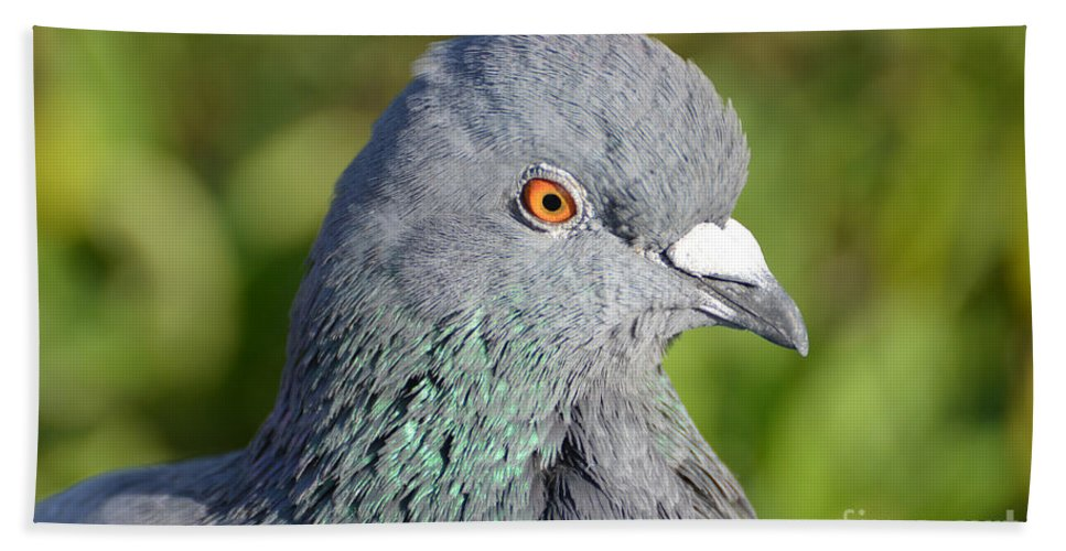 Dove Beach Towel featuring the photograph Dove by Mats Silvan