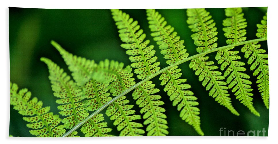 Fern Beach Towel featuring the photograph Fern Seed by Sharon Elliott