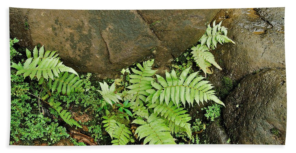 Ferns Beach Towel featuring the photograph Ferns by Michael Peychich