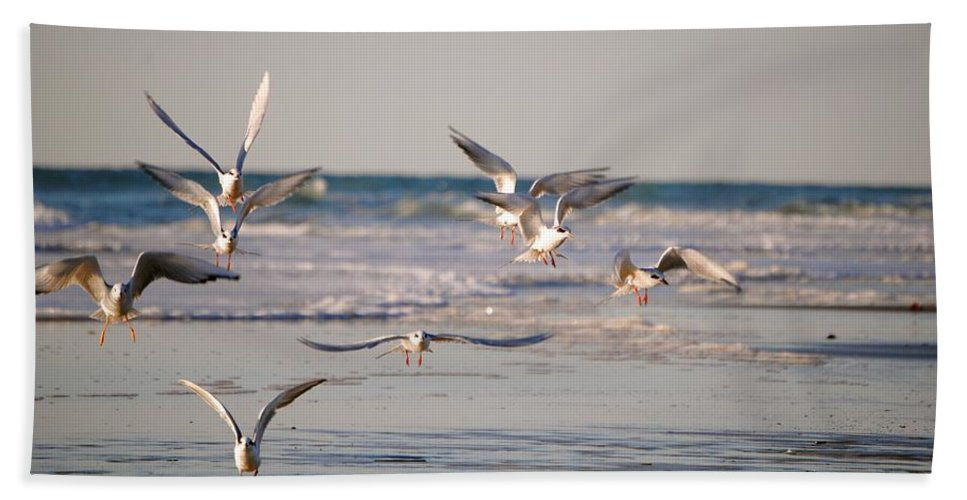 Seagull Print Beach Towel featuring the photograph Incoming by Deborah M Rinaldi