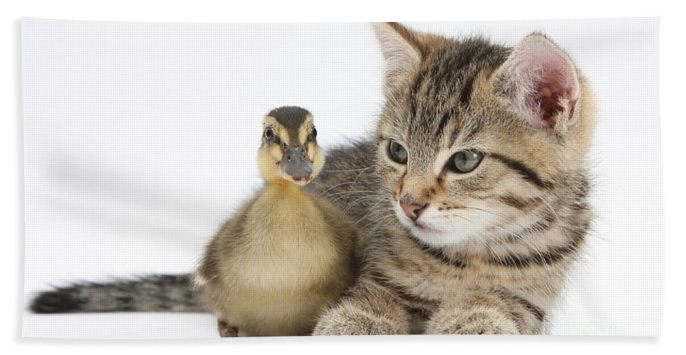Nature Beach Towel featuring the photograph Kitten And Duckling by Mark Taylor