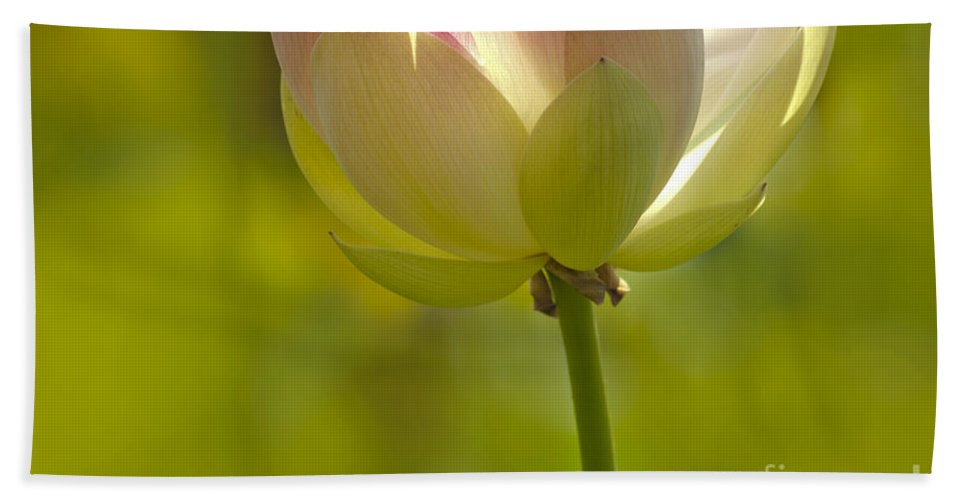 Nature Beach Towel featuring the photograph Lotus Detail by Heiko Koehrer-Wagner