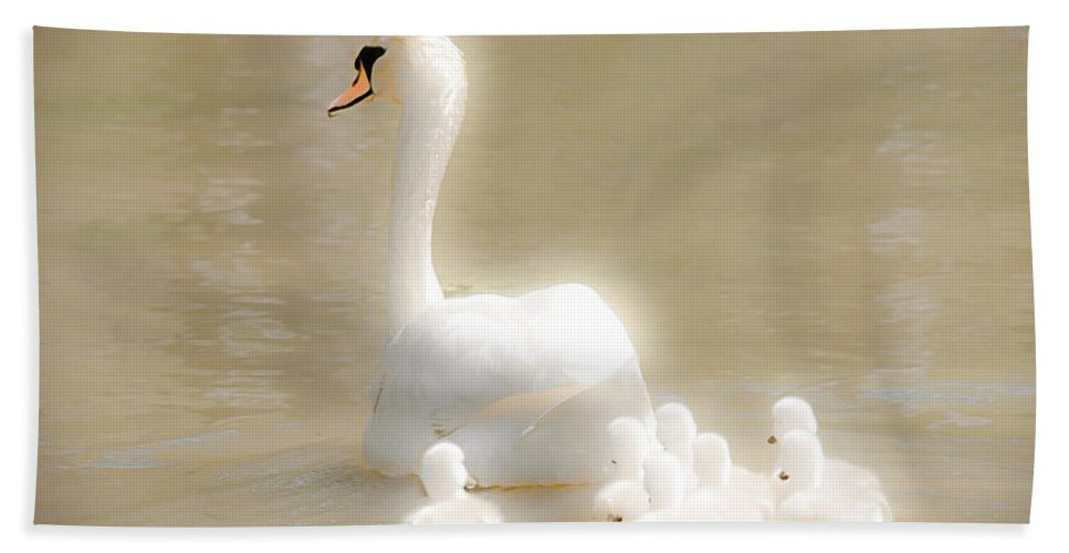 Swan Beach Towel featuring the photograph Mother Swan And Her Cygnets by Shirley Tinkham