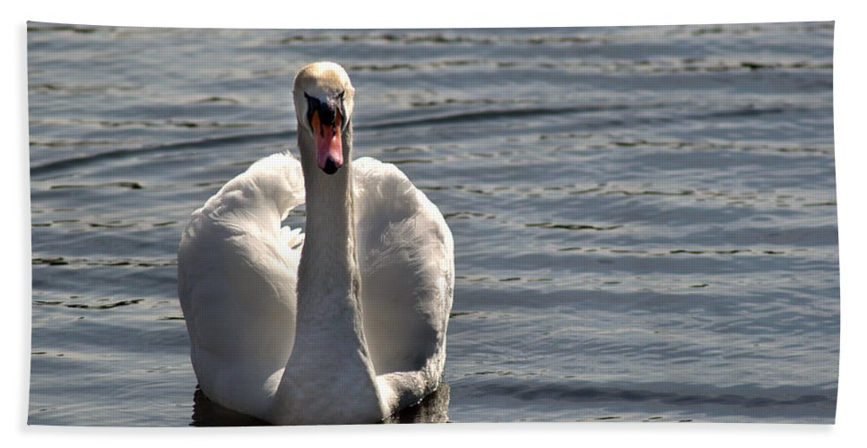 Swan Beach Towel featuring the photograph Mute Swan by Chris Day
