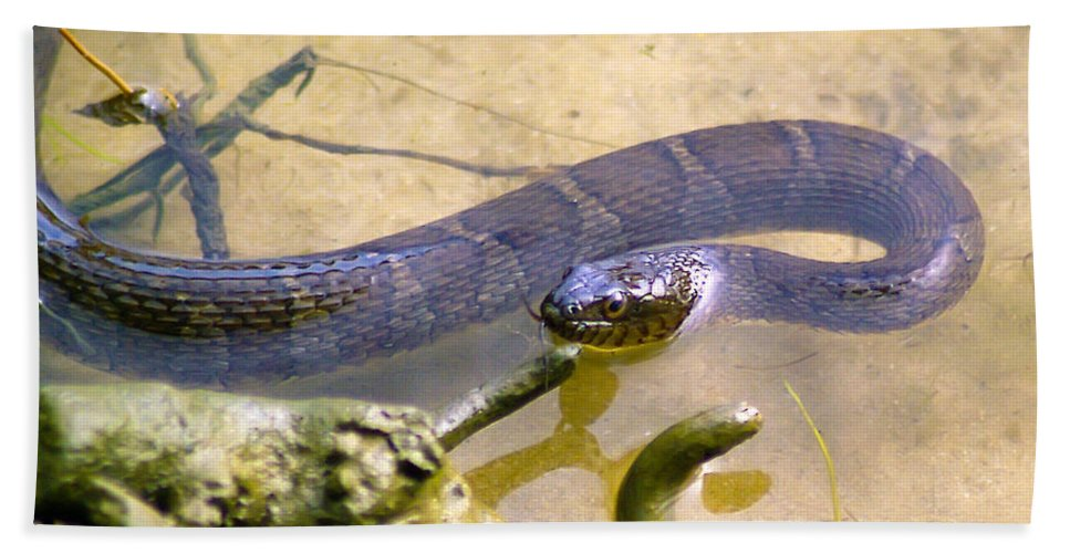 Brian Wallace Beach Towel featuring the photograph Northern Water Snake by Brian Wallace