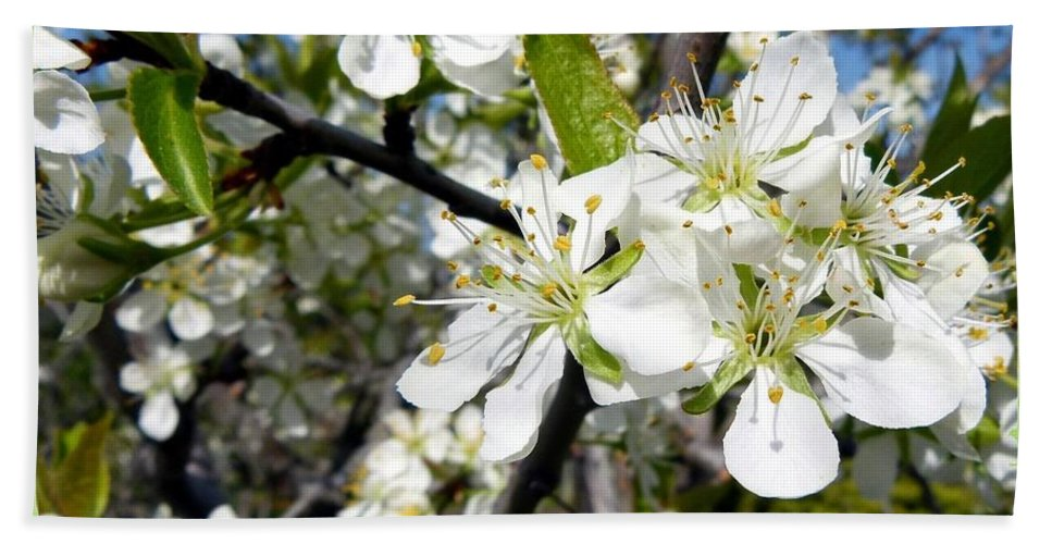 Prune Plum Tree Beach Towel featuring the photograph Plum Blossoms by Will Borden