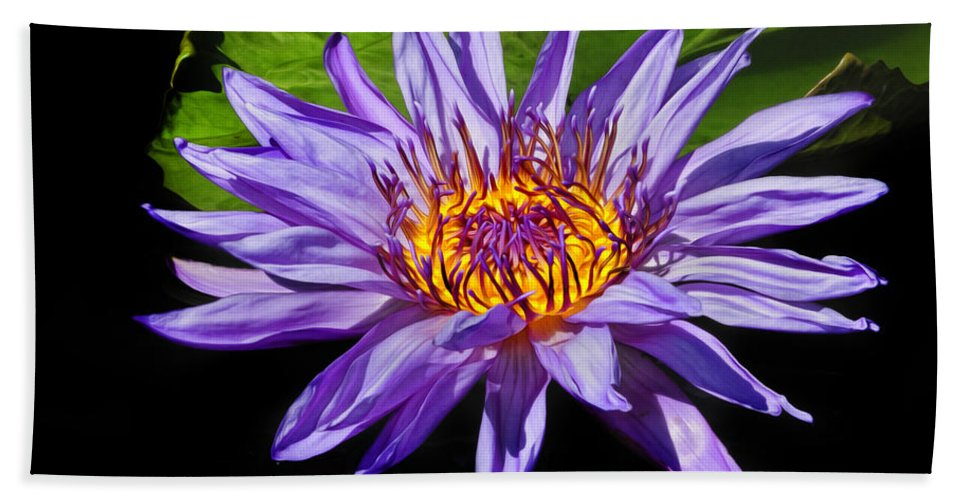 Waterlily Beach Towel featuring the photograph Purple Waterlily by Dave Mills