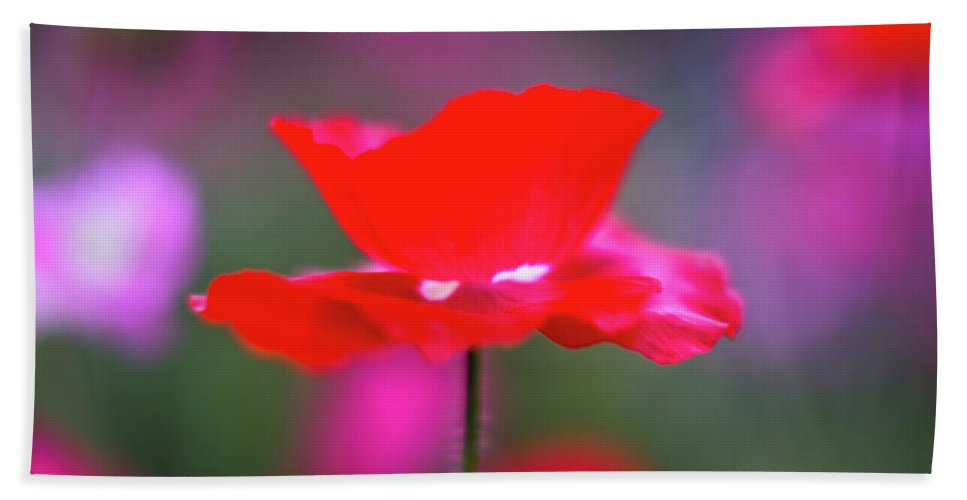 Flower Beach Towel featuring the photograph Red Flower by Greg Nyquist