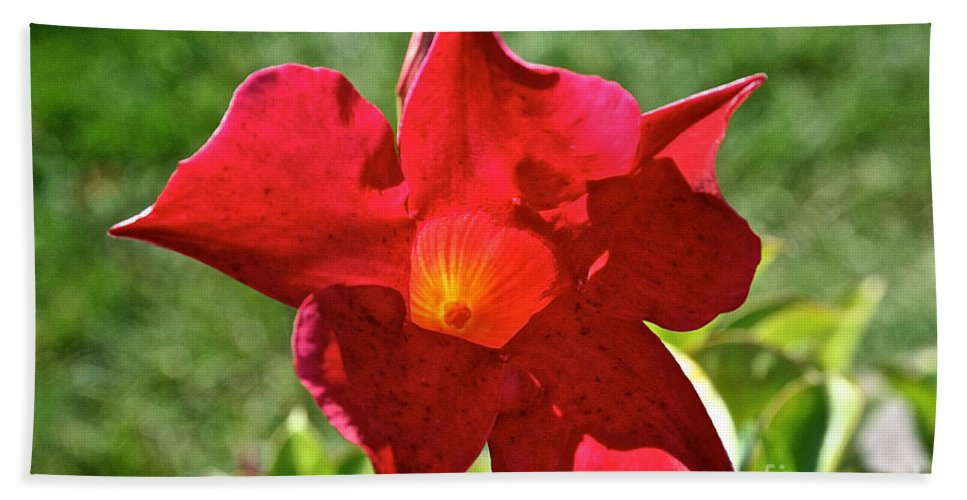 Outdoors Beach Towel featuring the photograph Red Mandevilla by Susan Herber