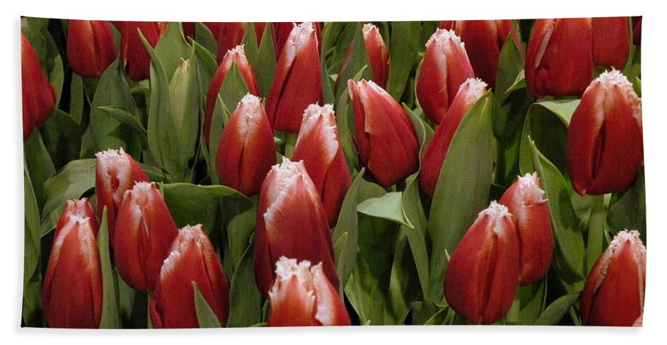 Red Beach Towel featuring the photograph Red Tulip Heaven by Trish Tritz