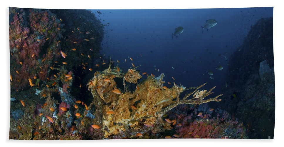 Fish Beach Towel featuring the photograph Reef Scene With Coral And Fish by Mathieu Meur