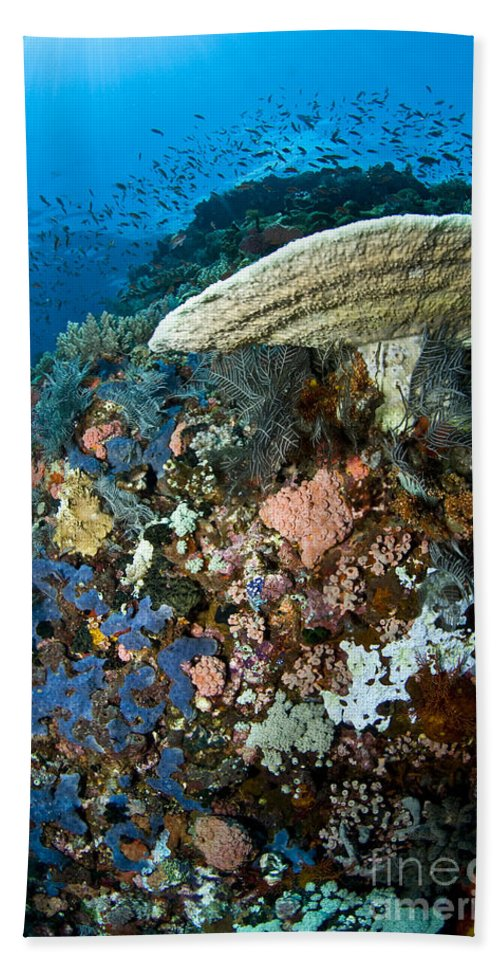 Sponge Beach Towel featuring the photograph Reef Scene With Corals And Fish by Mathieu Meur