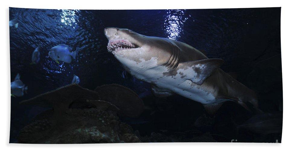 China Beach Towel featuring the photograph Sand Tiger Shark, Blue Zoo Aquarium by Mathieu Meur