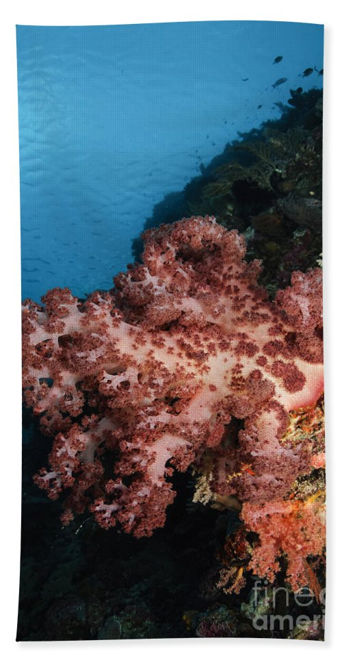 Ocean Beach Towel featuring the photograph Soft Coral Seascape, Indonesia by Todd Winner