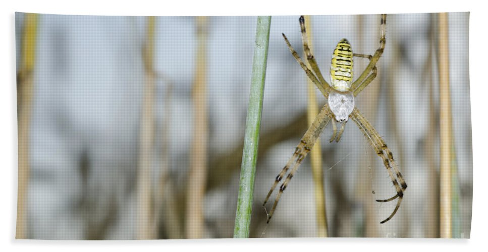 Spider Beach Towel featuring the photograph Spider by Mats Silvan