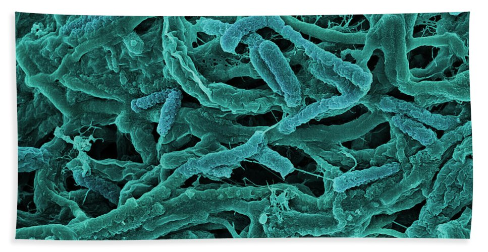 Bacteria Beach Towel featuring the photograph Thermophile Bacteria by Ted Kinsman