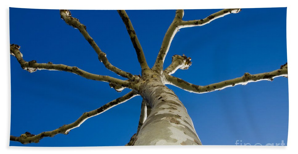 Tree Beach Towel featuring the photograph Tree With Branches by Mats Silvan