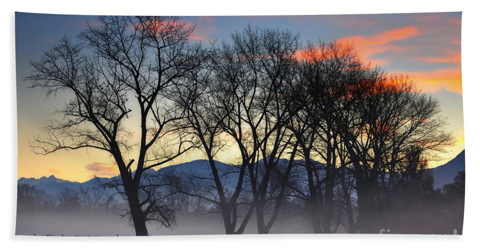 Trees Beach Towel featuring the photograph Trees With Fog by Mats Silvan