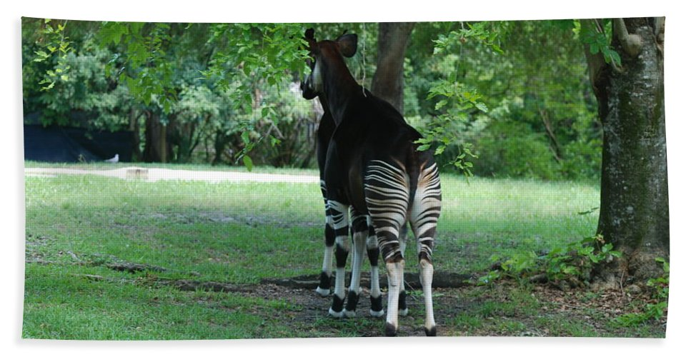 Animal Beach Towel featuring the photograph Two Stripes by Rob Hans