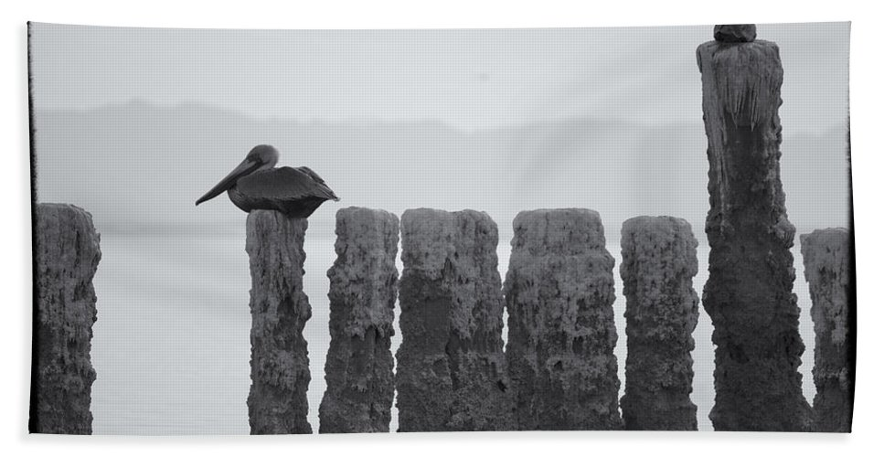 Birds Beach Towel featuring the photograph Waiting For Sunday by Linda Dunn