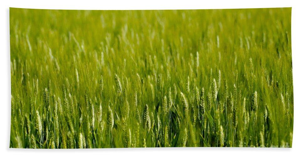 Wheat Beach Towel featuring the photograph Wheat Field by Mats Silvan
