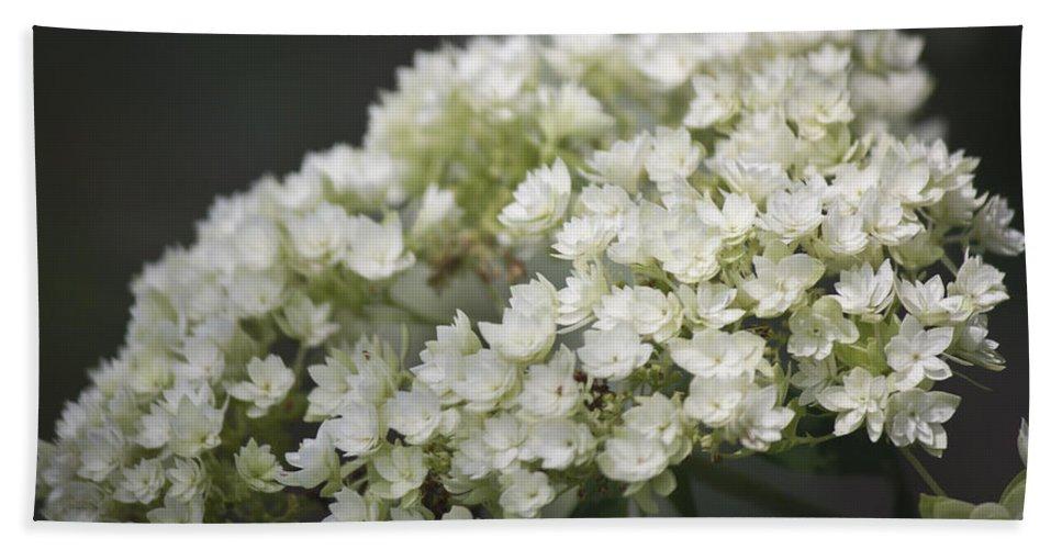 Hydrangea Beach Towel featuring the photograph White Hydrangea Bloom by Teresa Mucha