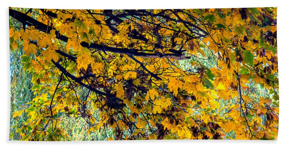 Xdop Beach Towel featuring the photograph Yellow Leaves by John Herzog