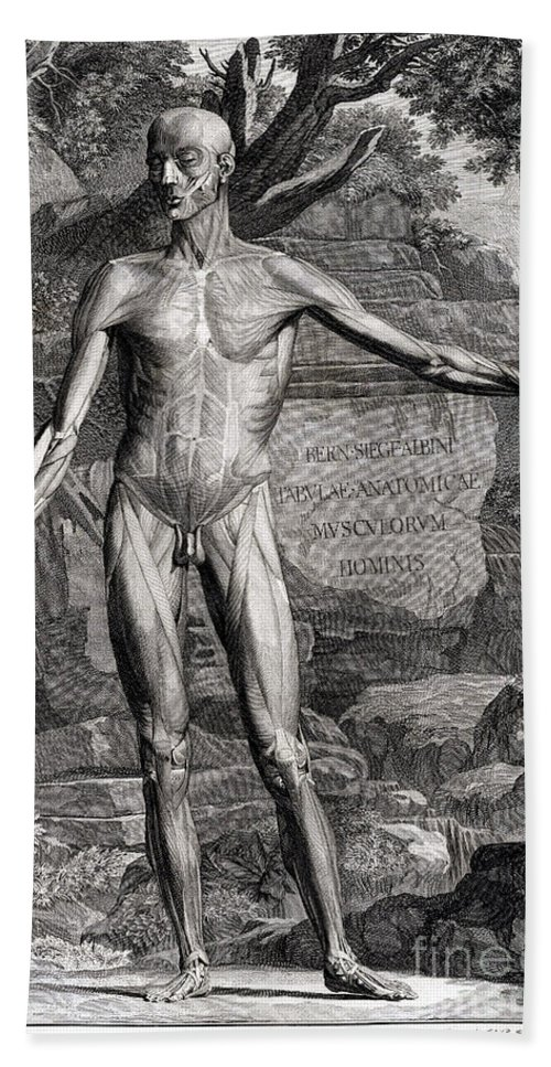 Science Beach Towel featuring the photograph 18th Century Anatomical Engraving by Science Source