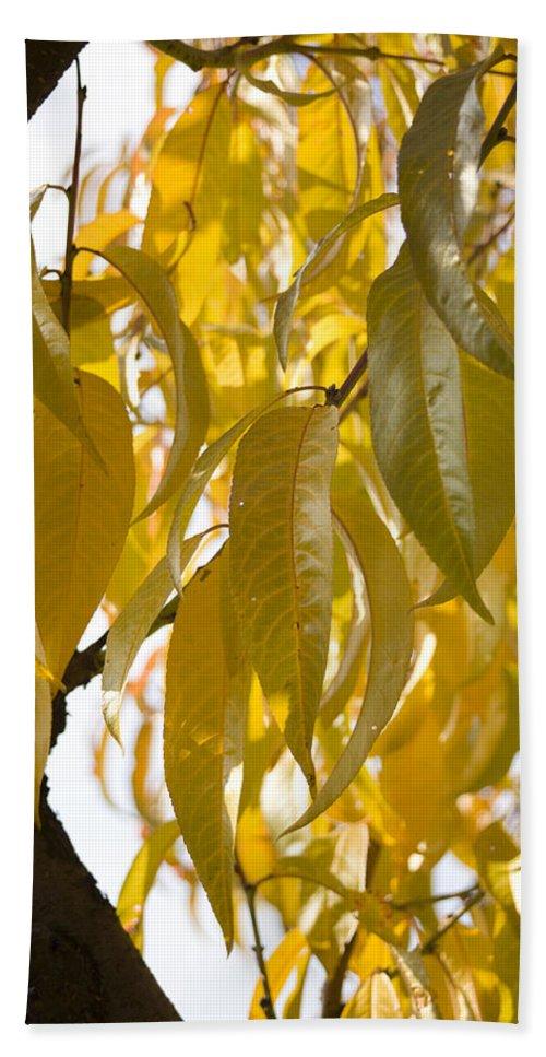 Autumn Beach Towel featuring the photograph Autumn by Ian Middleton