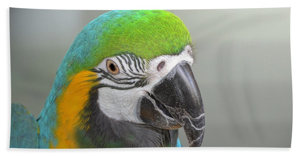 Nature Beach Towel featuring the photograph Blue And Yellow Macaw by Debbie Portwood