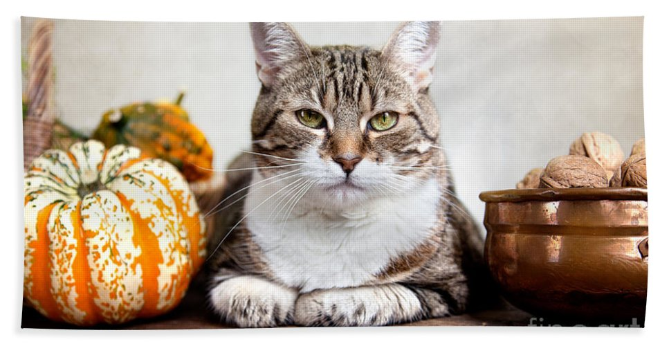 Cat Beach Towel featuring the photograph Cat And Pumpkins by Nailia Schwarz