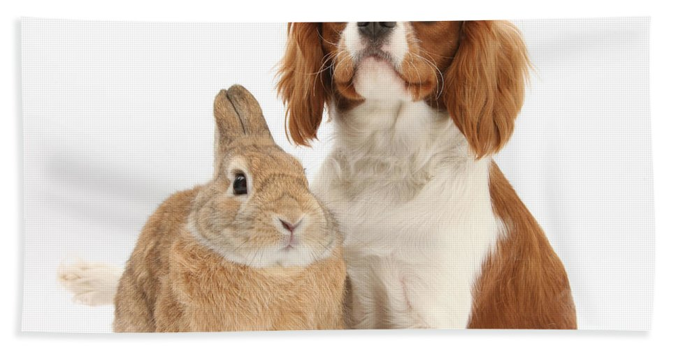 Nature Beach Towel featuring the photograph Cavalier King Charles Spaniel by Mark Taylor
