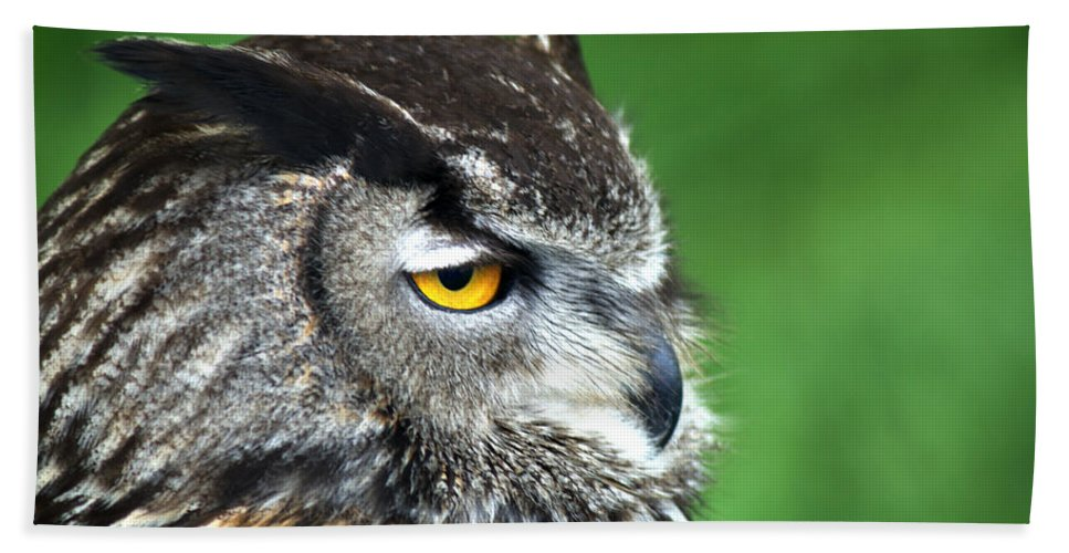 Eagle Owl Beach Towel featuring the photograph Eagle Owl by Chris Day