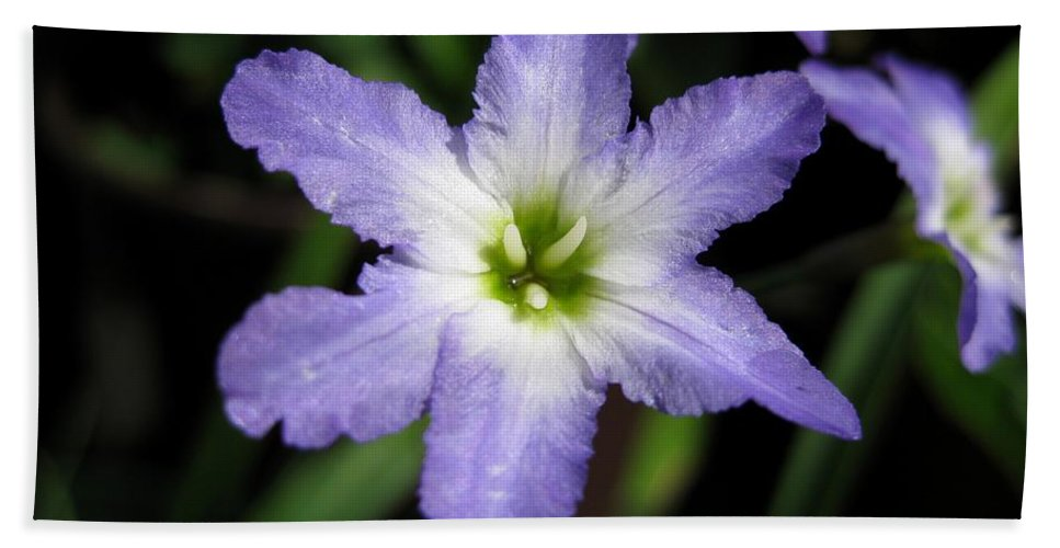 Leucocoryne Beach Towel featuring the photograph Glory Of The Sun by J McCombie