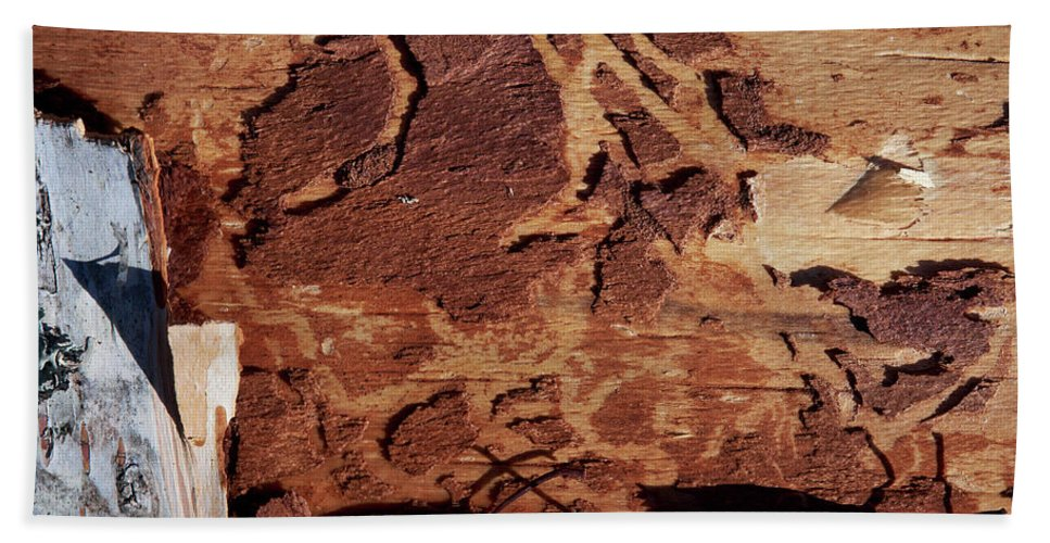 Autumn Beach Towel featuring the photograph Natural Carvings by Jouko Lehto