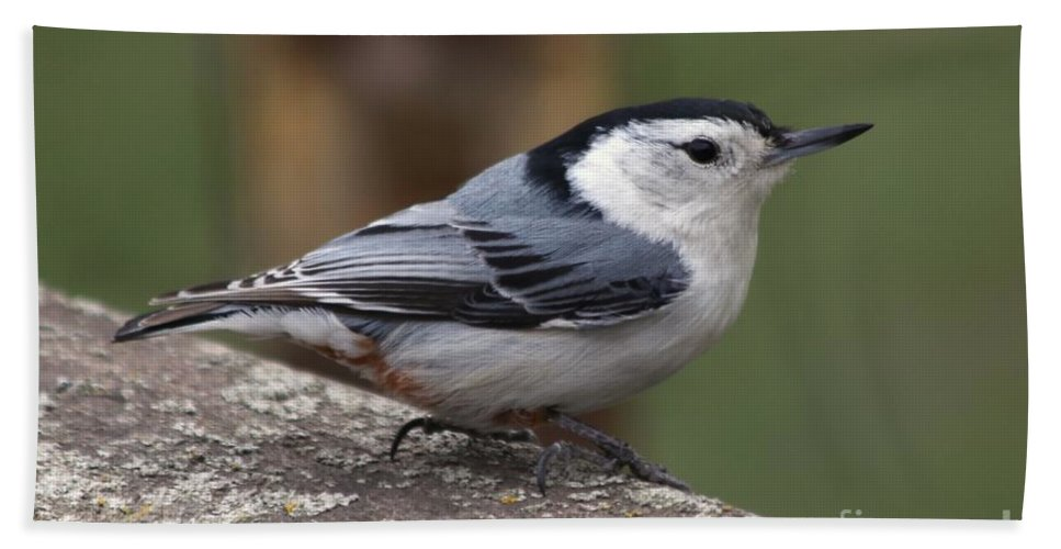 Nuthatch Beach Towel featuring the photograph Nuthatch by Lori Tordsen