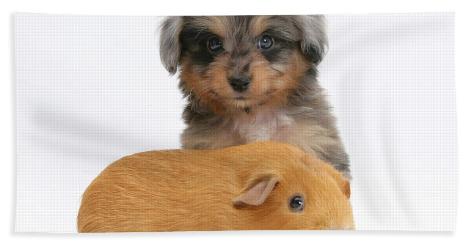 Animal Beach Towel featuring the photograph Puppy And Guinea Pig by Mark Taylor