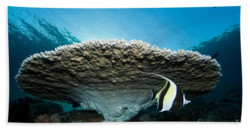 Moorish Idol Beach Towel featuring the photograph Reef Scene With Corals And Fish by Mathieu Meur