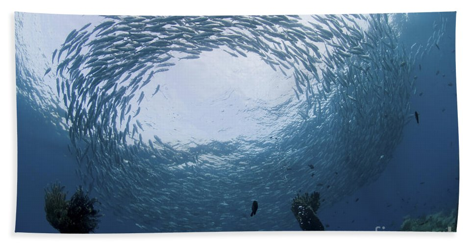 Circling Beach Towel featuring the photograph School Of Jacks At Liberty Wreck, Bali by Mathieu Meur