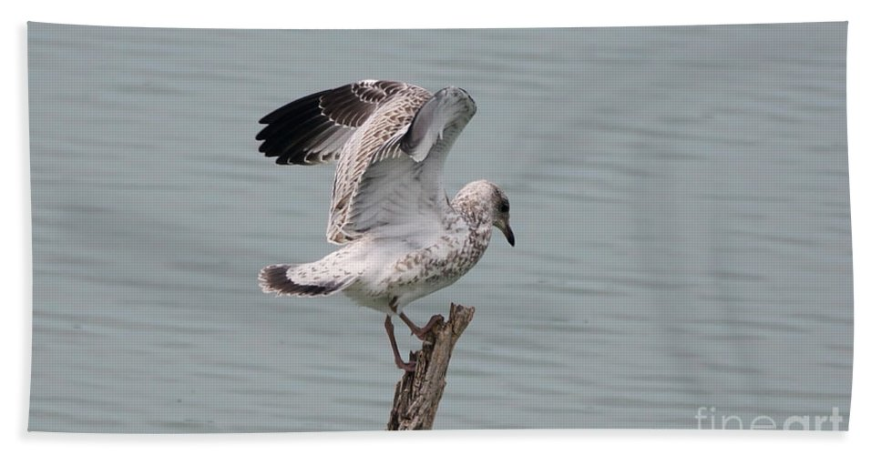 Seagull Beach Towel featuring the photograph Wing Test by Lori Tordsen