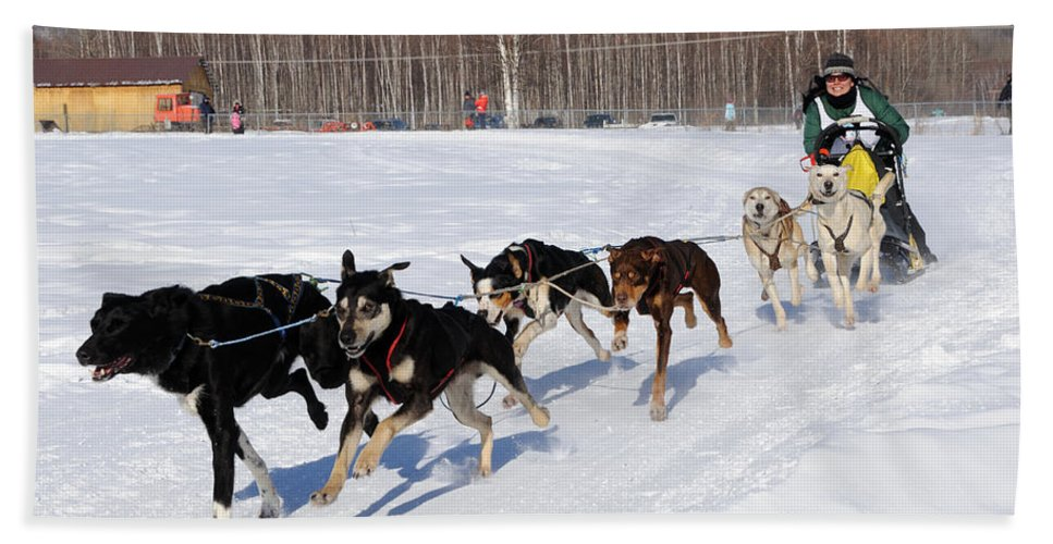 Sled Beach Towel featuring the photograph 2010 Limited North American Sled Dog Race by Gary Whitton