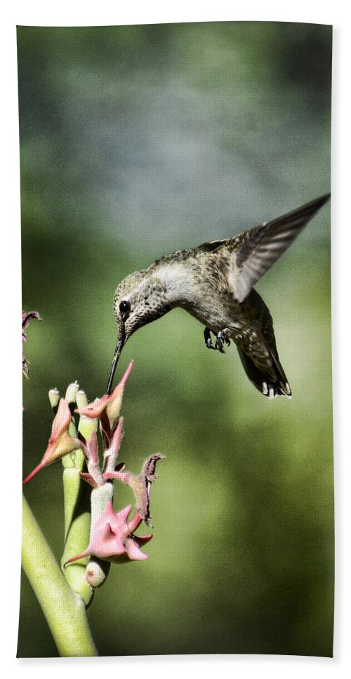 Annas Hummingbird Beach Towel featuring the photograph Anna's Hummingbird by Saija Lehtonen