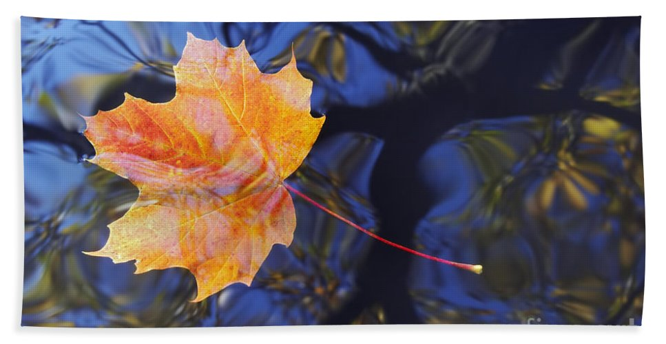 Leaf Beach Towel featuring the photograph Autumn Leaf On The Water by Michal Boubin