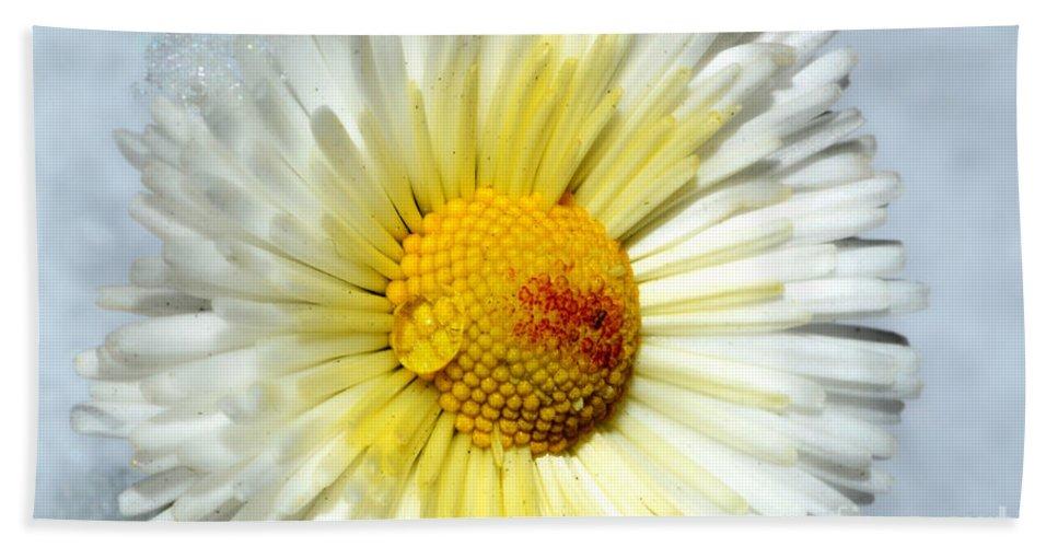 Daisy Beach Towel featuring the photograph Daisy Flower by Mats Silvan